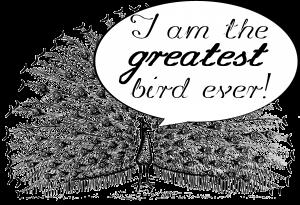 Peacock_terms